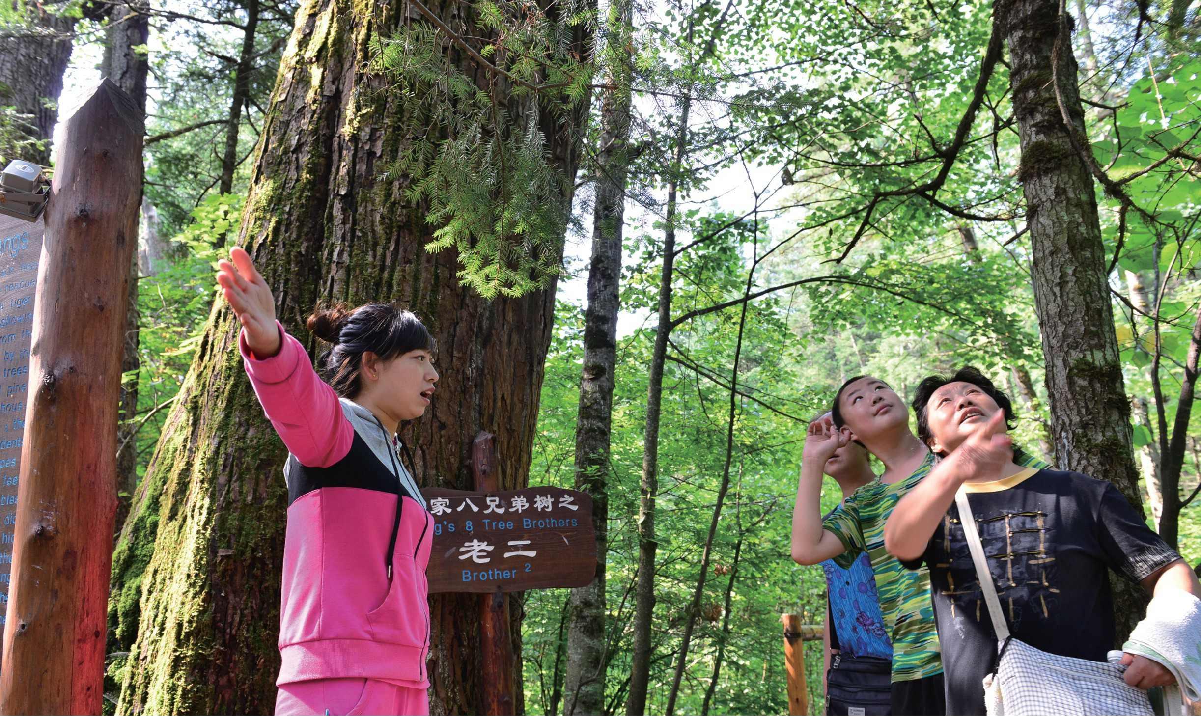 """盛夏八月,长白山成为海内外游客避暑度假的胜地。行走在位于长白山脚下的大戏台河原生态景区,高负氧离子含量的新鲜空气,让人仿佛置身于天然的""""森林氧吧""""。 黄松蒲林场自筹资金自主开发的森林生态旅游项目,实现了我公司""""变砍树为看树""""的绿色转型发展目标。 """"早些年的林子密不透光,现在可采的大树逐年减少。为了发展,我们牺牲了资源,甚至可以说是'杀鸡取卵'。""""党委书记荆彦林说,""""停伐后,我们主要向两个大方向"""
